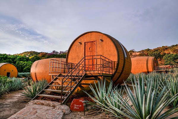 tequila của mexico